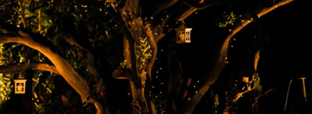 Photograph from A Midsummer Night's Dream - lighting design by Scott Allan