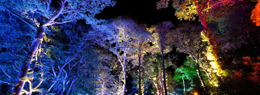 Photograph from Enchanted Forest: Transitions - lighting design by Simon Wilkinson