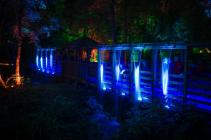 Photograph from Enchanted Forest: Flow - lighting design by Simon Wilkinson