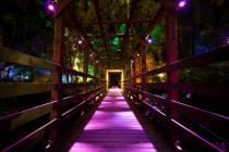 Photograph from Enchanted Forest - lighting design by Simon Wilkinson