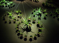 Photograph from Trans:plant - lighting design by Marty Langthorne